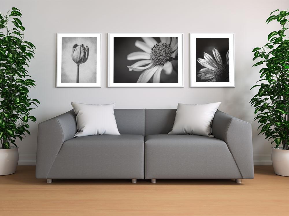posters blommor svartvitt