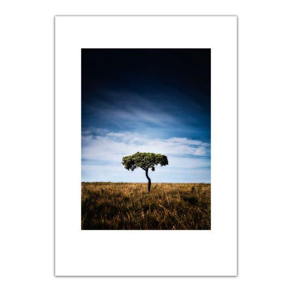 poster trädet närsholmen gotland
