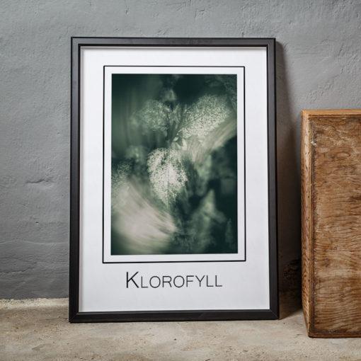 Blad, Klorofyll