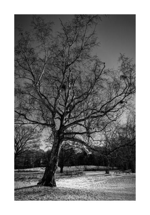 vinter beijers park poster