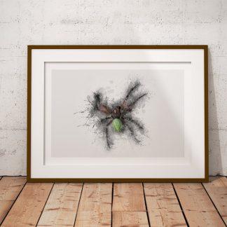 Araniella cucurbitina spindel poster