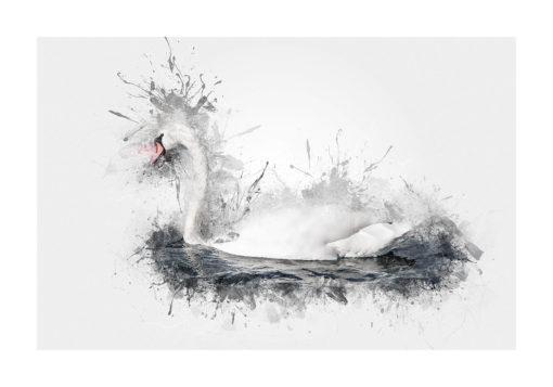 svan svanen poster