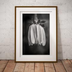 blomma svartvit poster