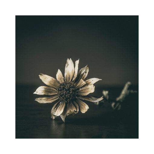 slutet blomma poster