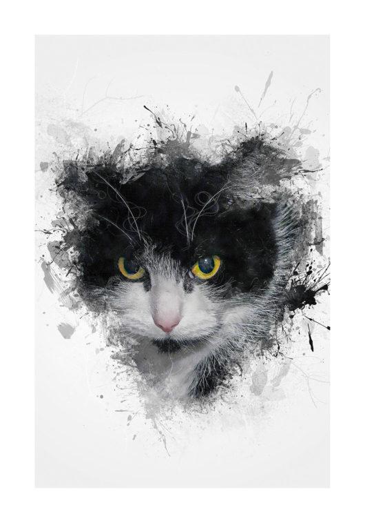 katt katten svart poster