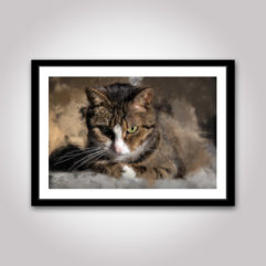 katt katten poster
