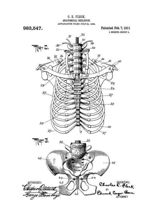 Skeleton skelett patentritning poster
